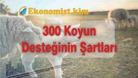 TİGEM 300 Koyun Başvuruları Başladı Mı? Şartları Nelerdir?